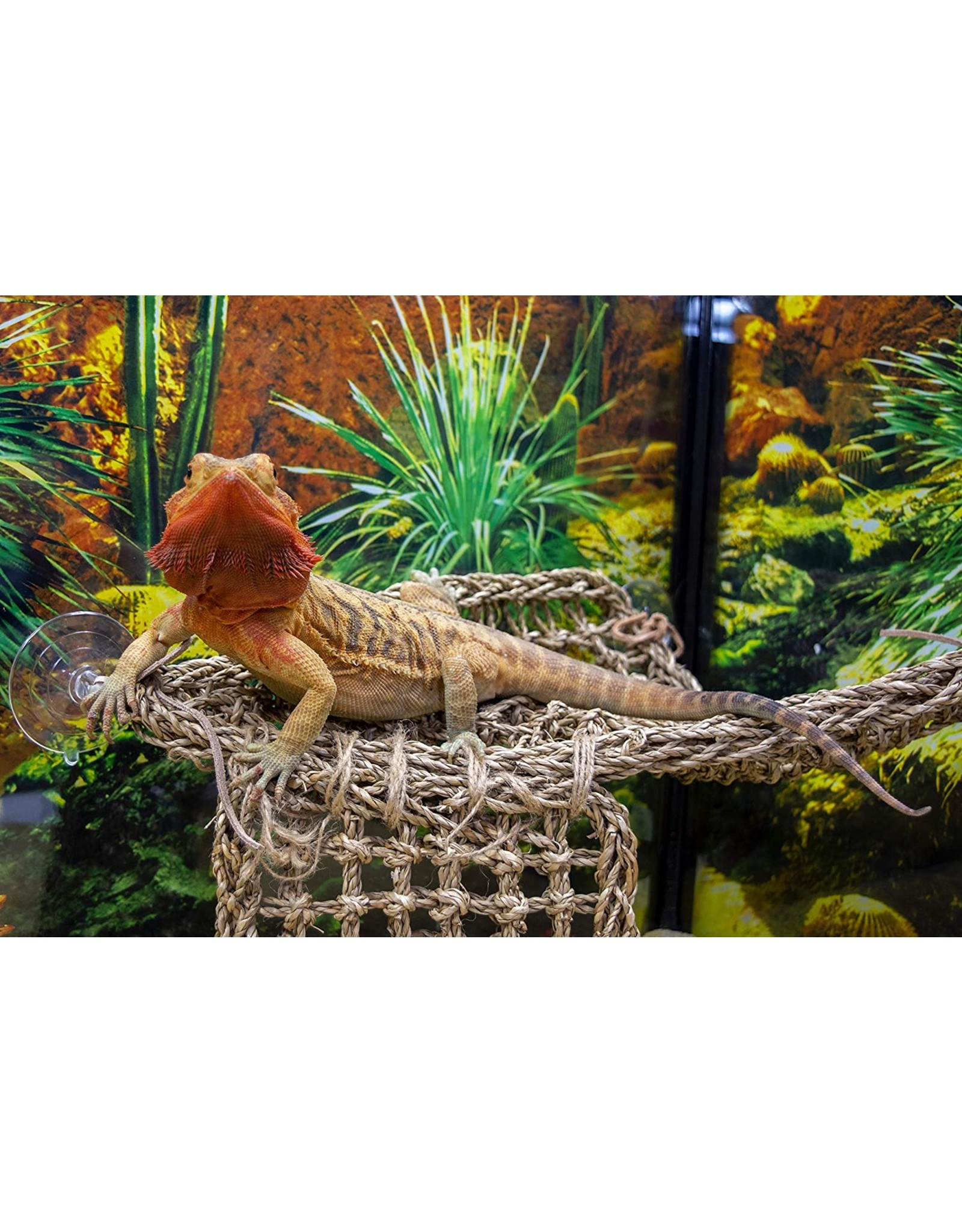 Penn Plax PENN PLAX Natural Lizard Lounger Hammock Corner
