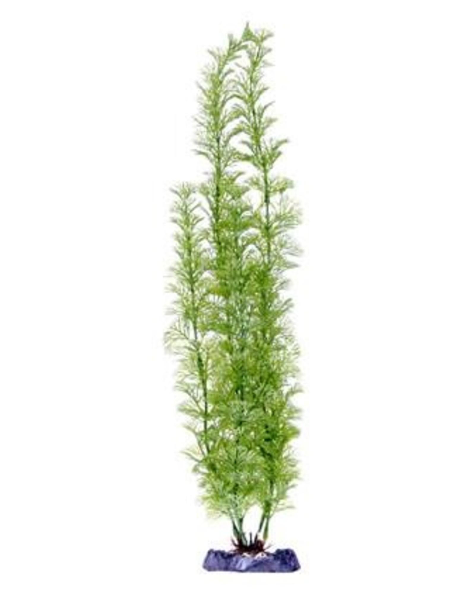 Penn Plax PENN PLAX Sinker Plant Flowering Cabomba Super