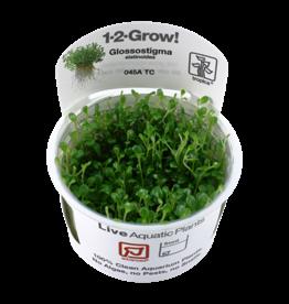 Tropica 1-2-GROW! Glossostigma elatinoides