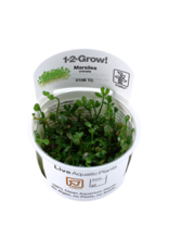 Tropica 1-2-GROW! Marsilea crenata