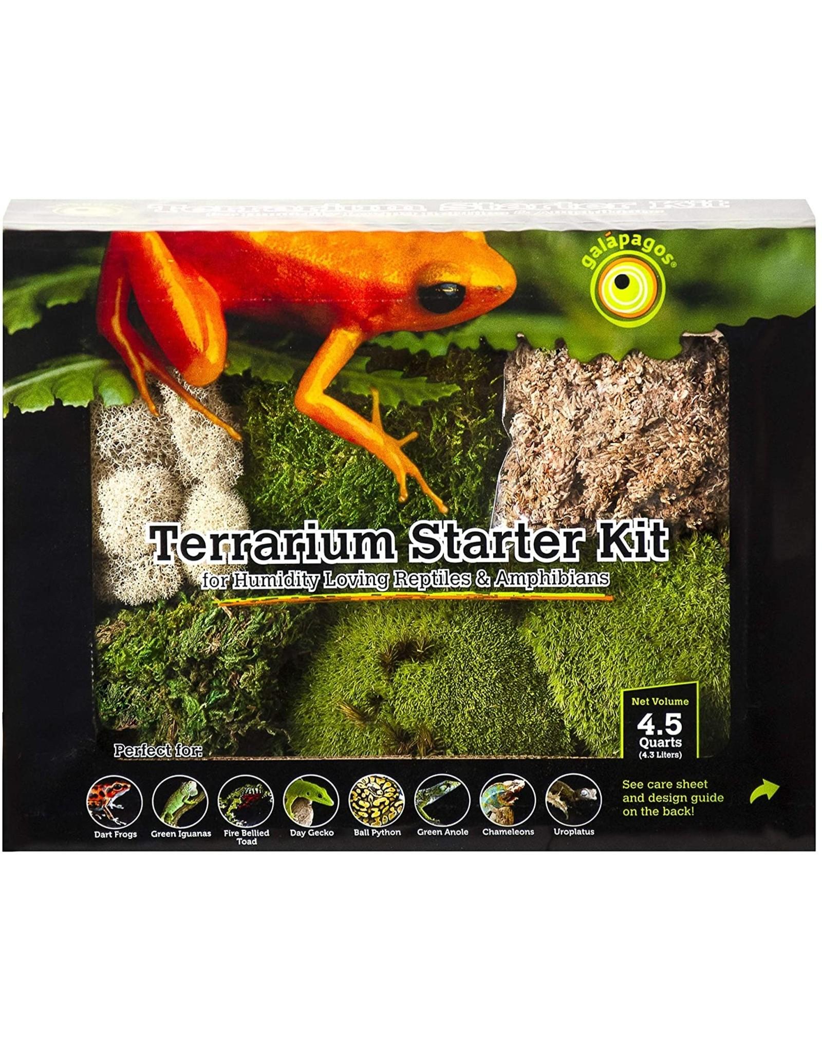 Galapagos GALAPAGOS Terrarium Starter Kit Humid Environment 4.5qt