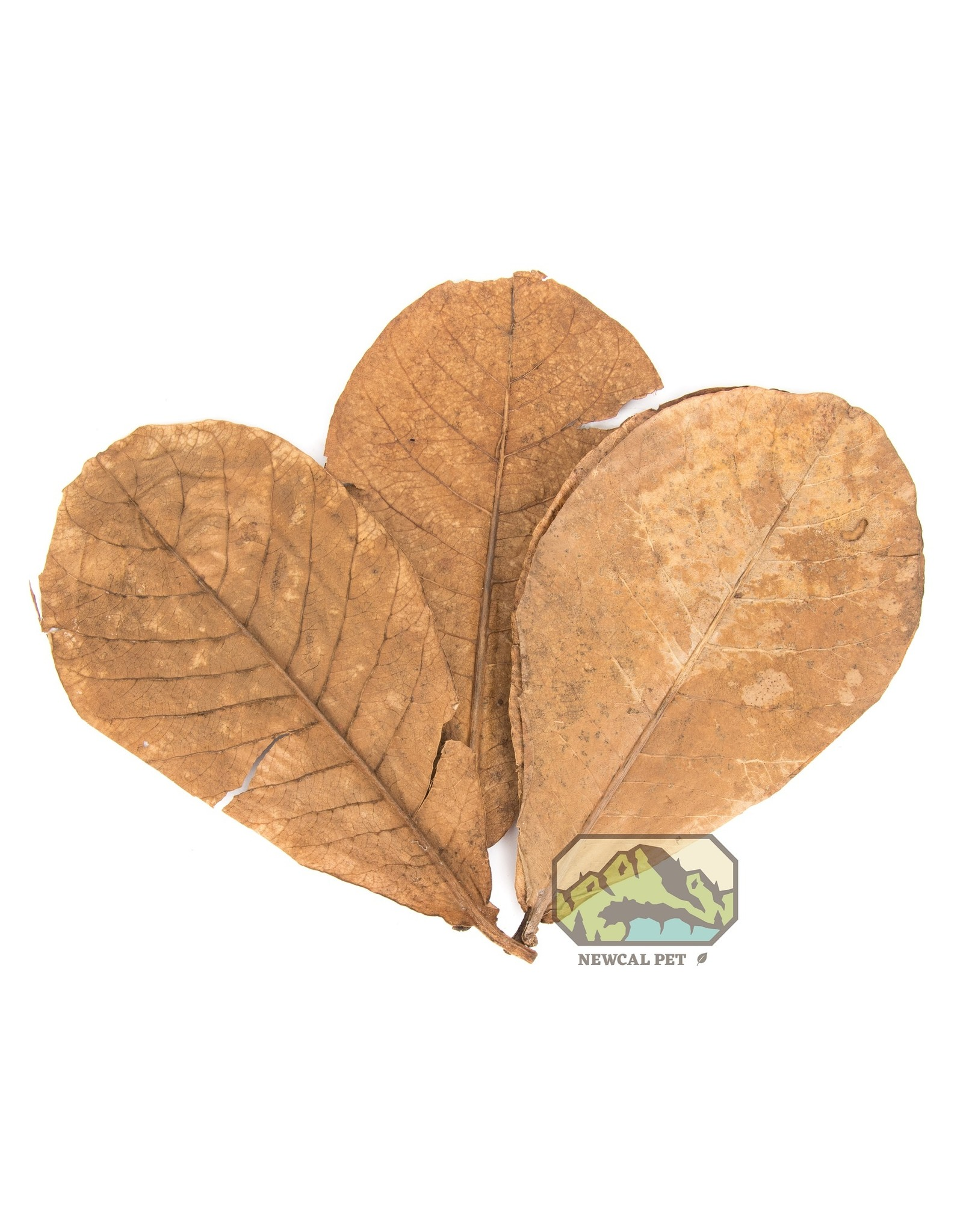 """New Cal Pet NEW CAL Indian Almond Leaves Grade AAA (9""""-11"""") 10 Pack"""