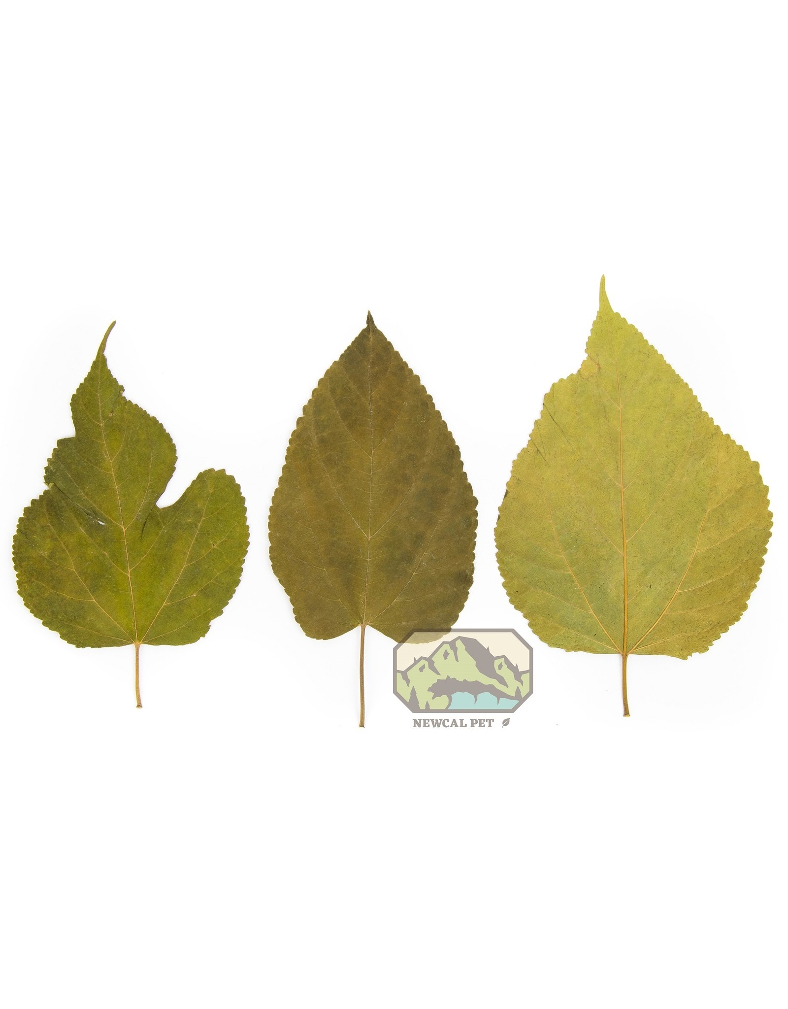 """New Cal Pet NEW CAL Mulberry Leaves 5-8"""" 10pack"""