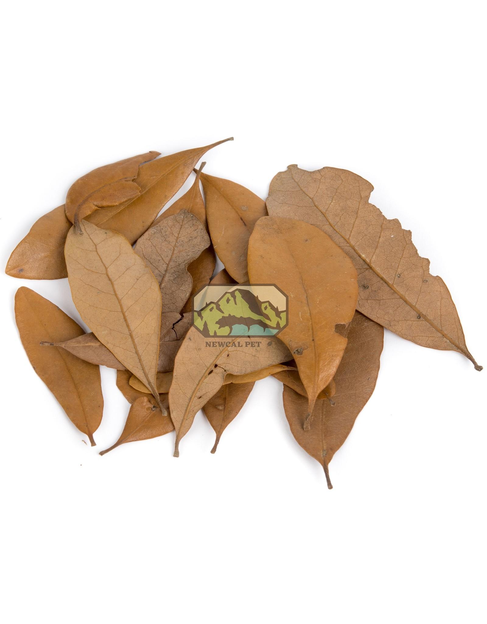 New Cal Pet NEW CAL Live Oak (Dried) Leaves