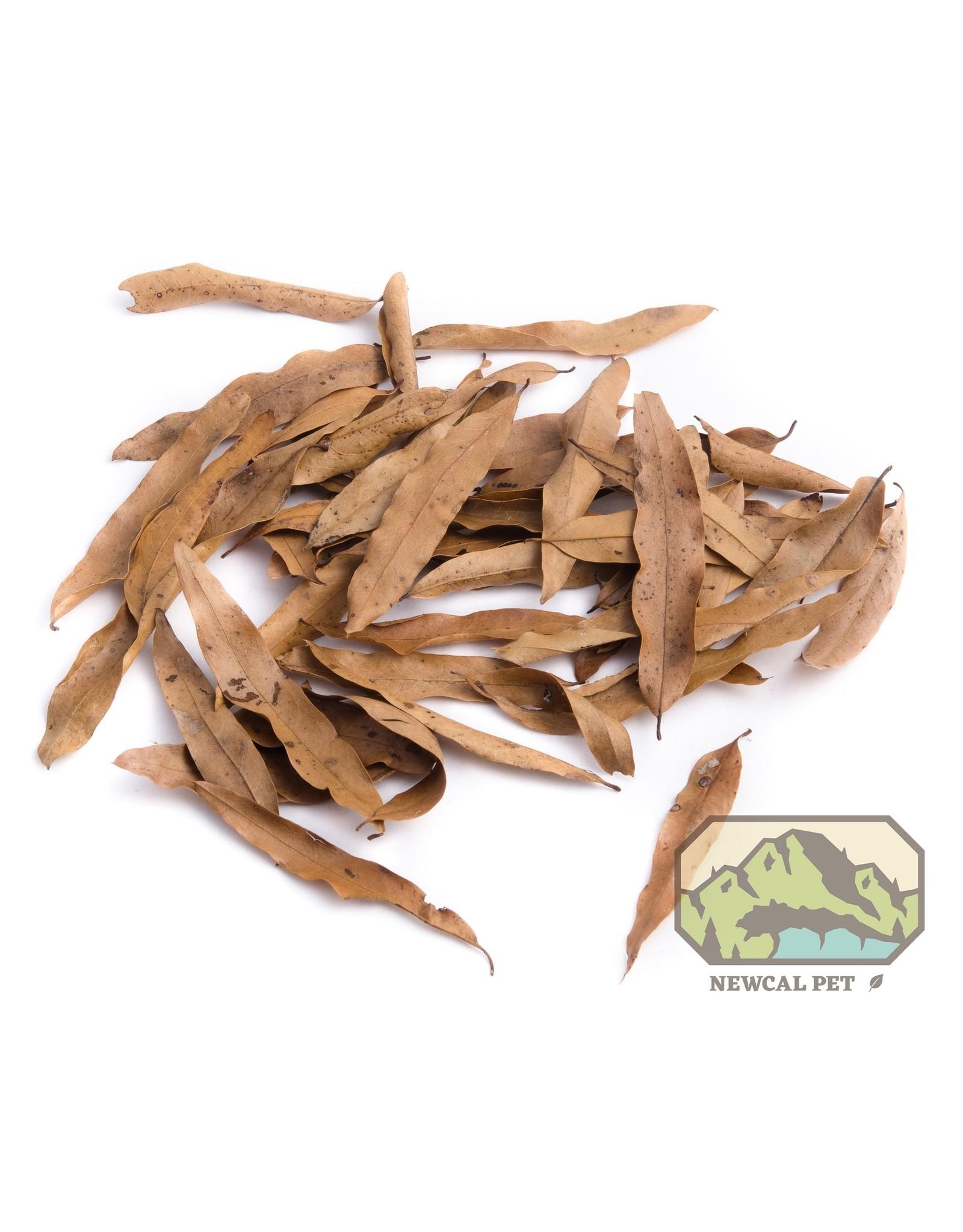 New Cal Pet NEW CAL Willow Oak Leaves