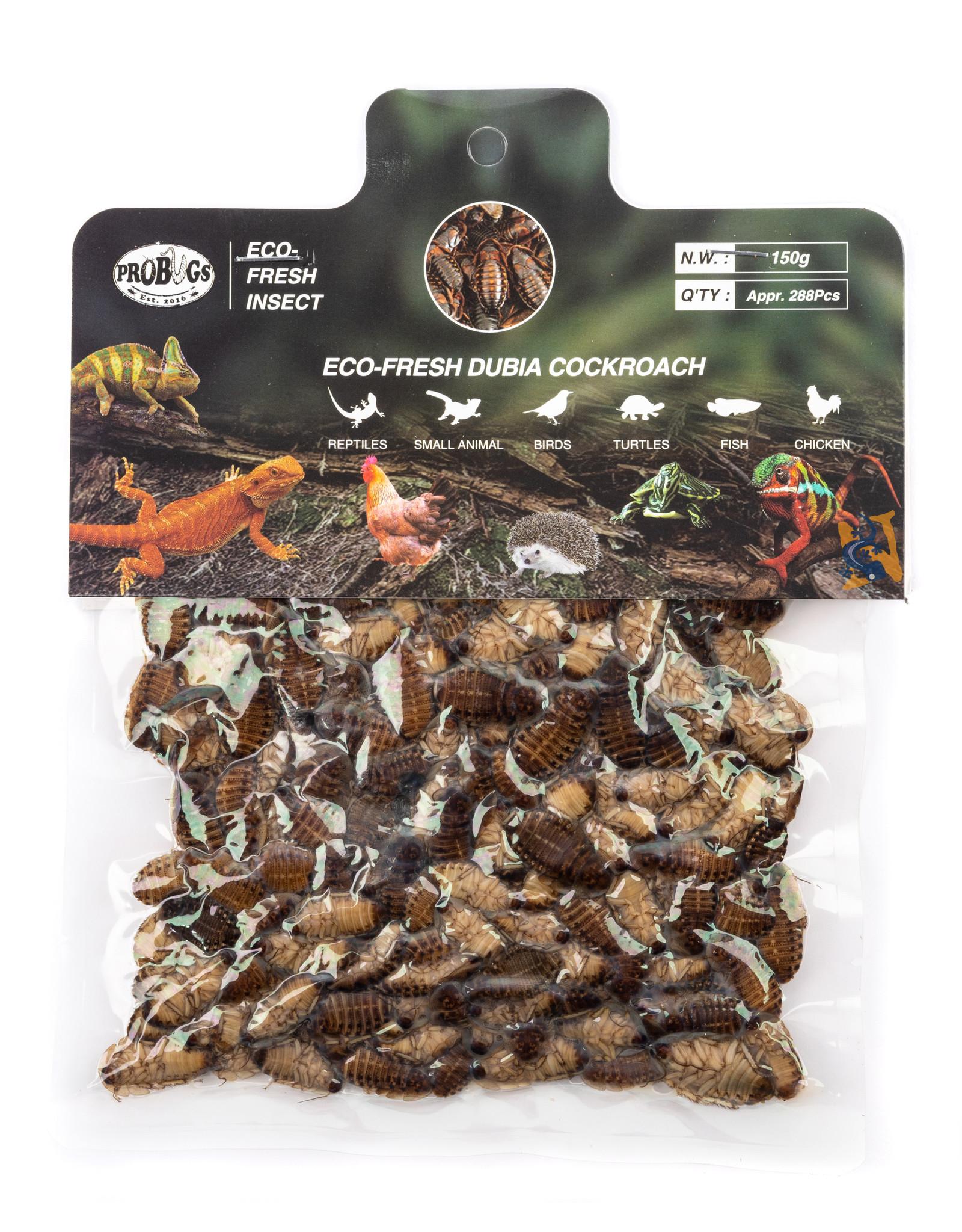 Pro Bugs PRO BUGS Dubia Cockroach Bulk Medium (288pcs)