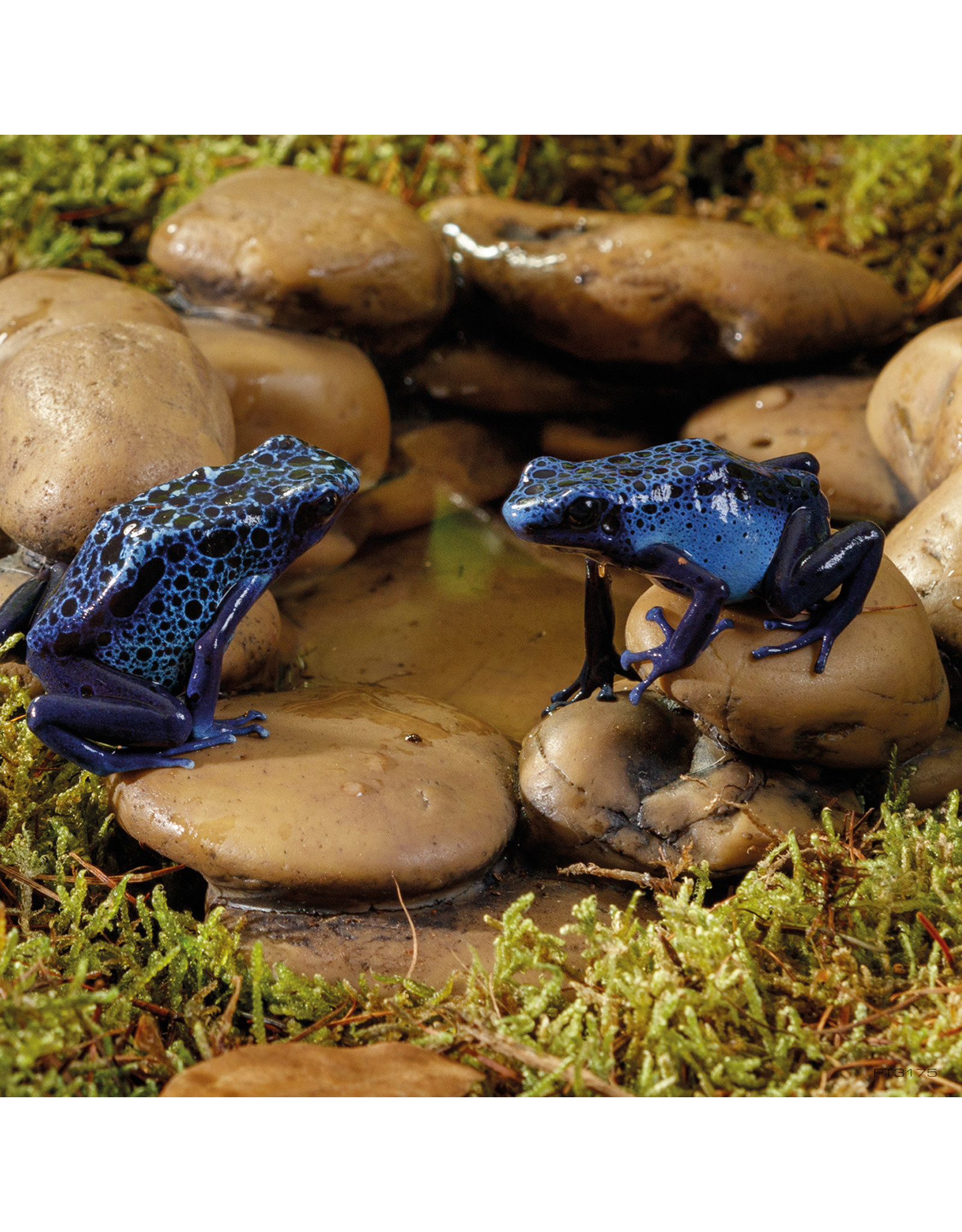 Exo Terra EXO TERRA Frog Pond
