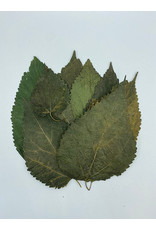 Catappa Canada CATAPPA CANADA Mulberry Leaves 8 Pack