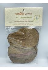 Catappa Canada CATAPPA CANADA Almond Leaves Medium 30 pack