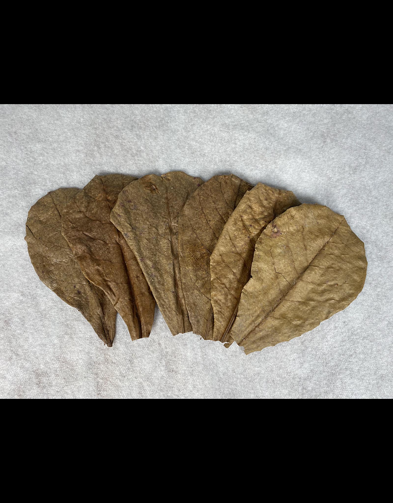 Catappa Canada CATAPPA CANADA Almond Leaves 6 pack