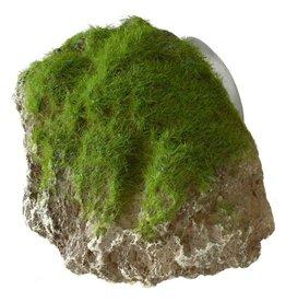 Aqua Della AQUA DELLA Moss Stone w/Suction Cup Small