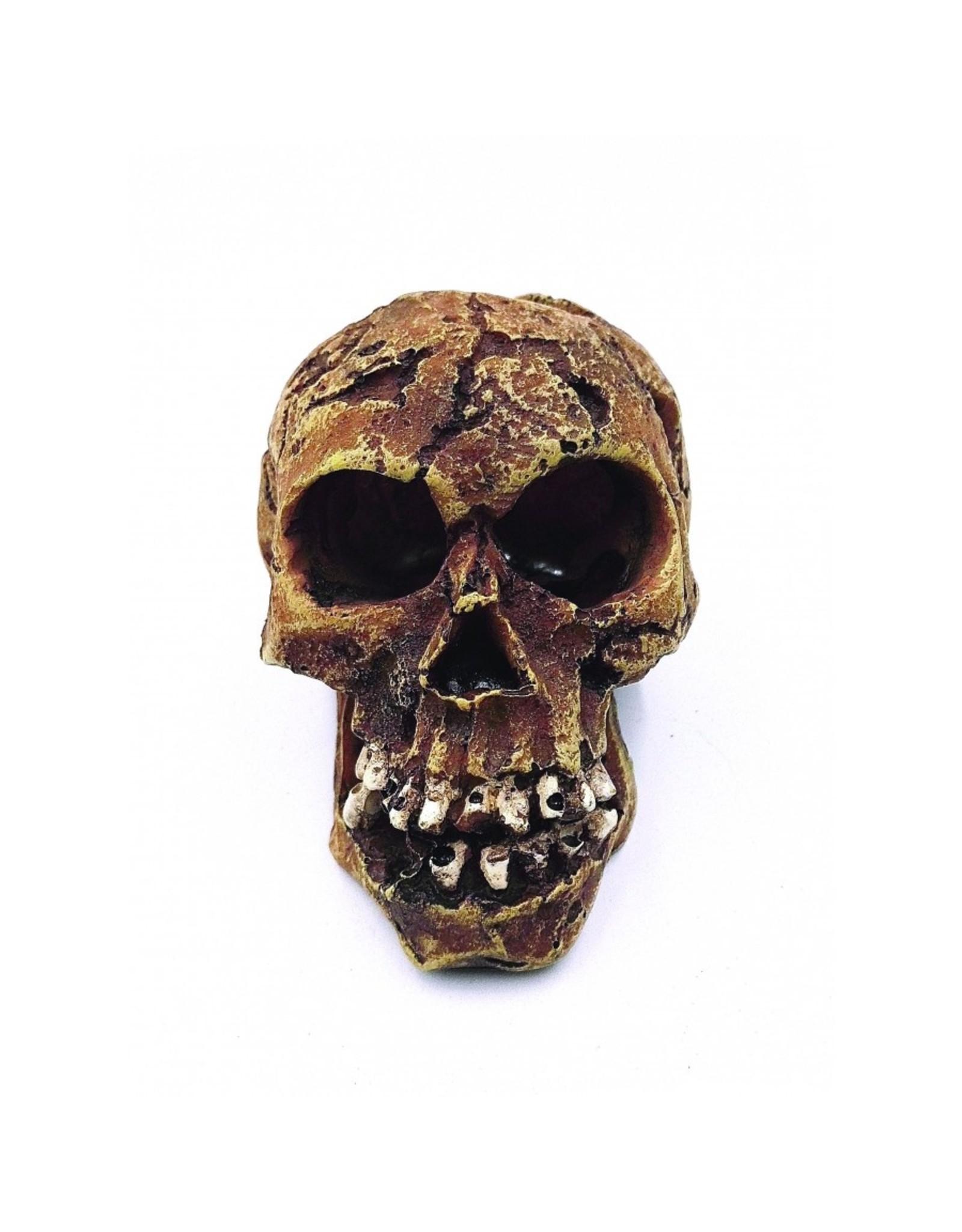"""Burgham Aqua-Fit AQUA-FIT Skull Large 6.5x5x5"""""""