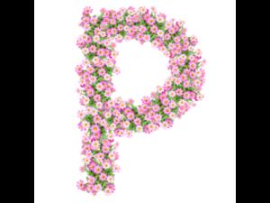 Pink Reef