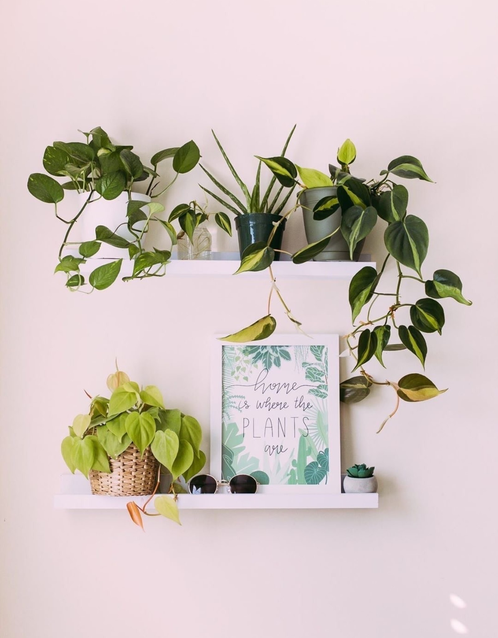 Cardinal Directions CD Home is Where the Plants are Print