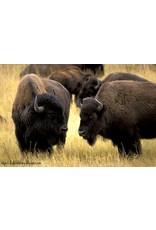 PCE Buffalo & Rice 20#