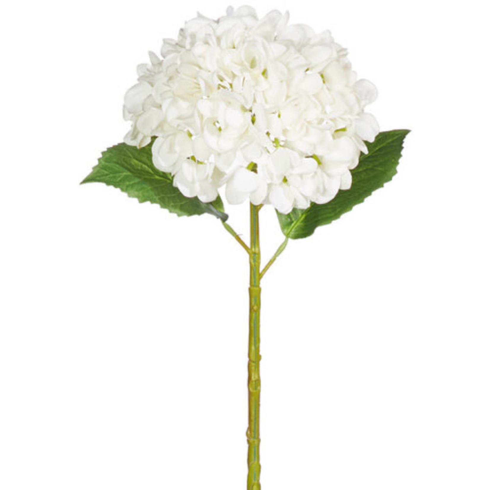 "20"" RT White Hydrangea Stem"
