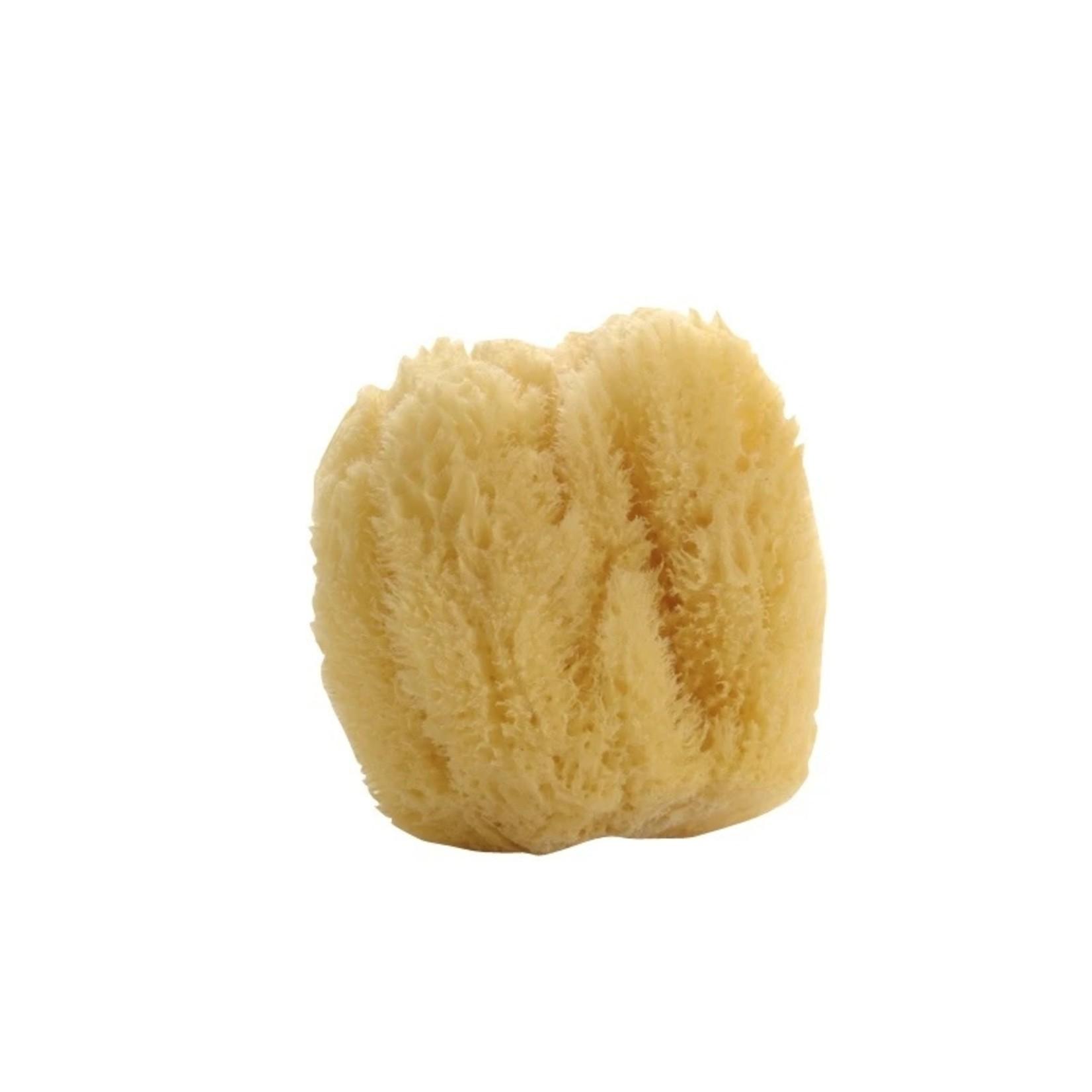 Natural Sea Sponge (Multiple Sizes)