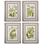 Green Botanical Framed Print (Multiple Options)