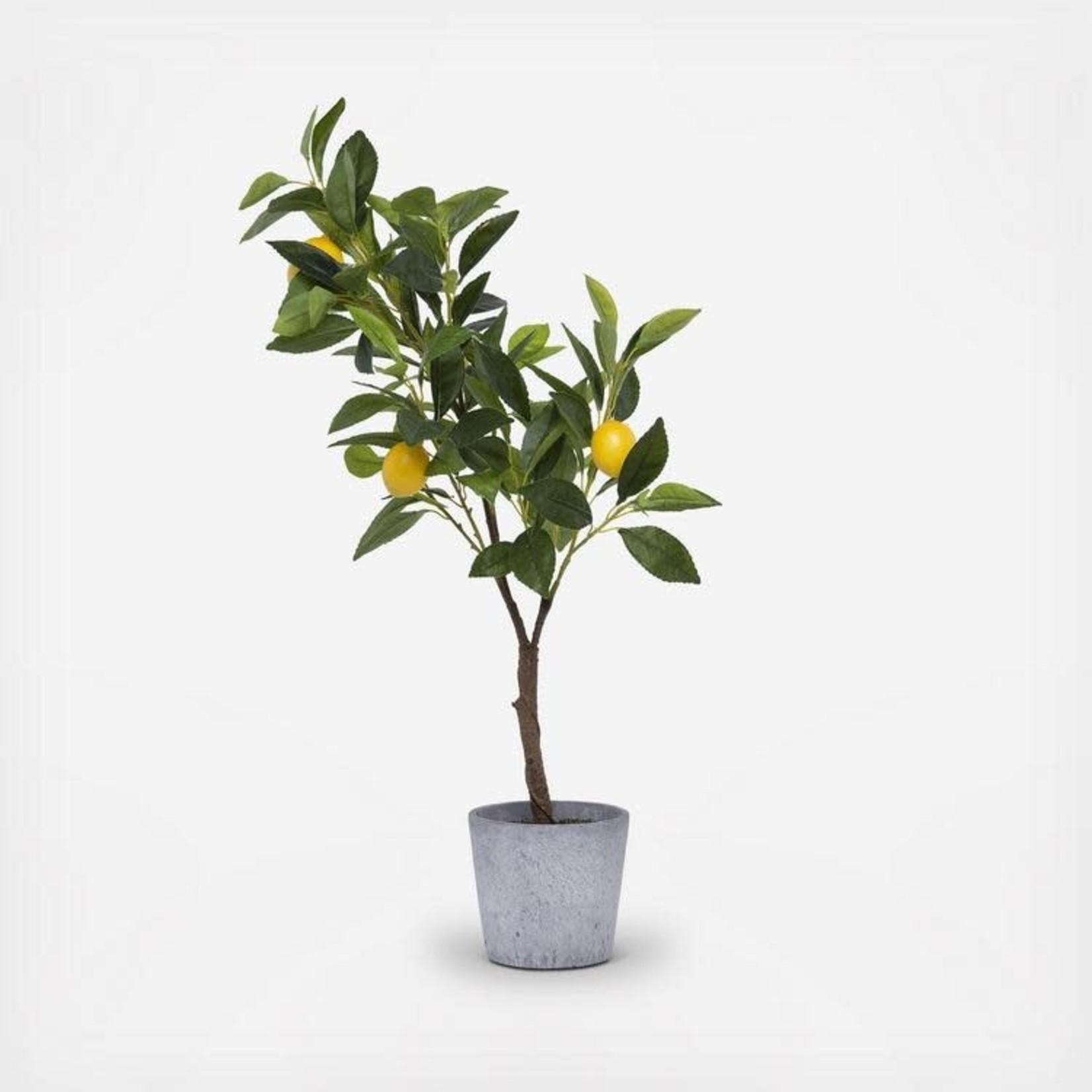 Faux Lemon Tree in Cement Pot