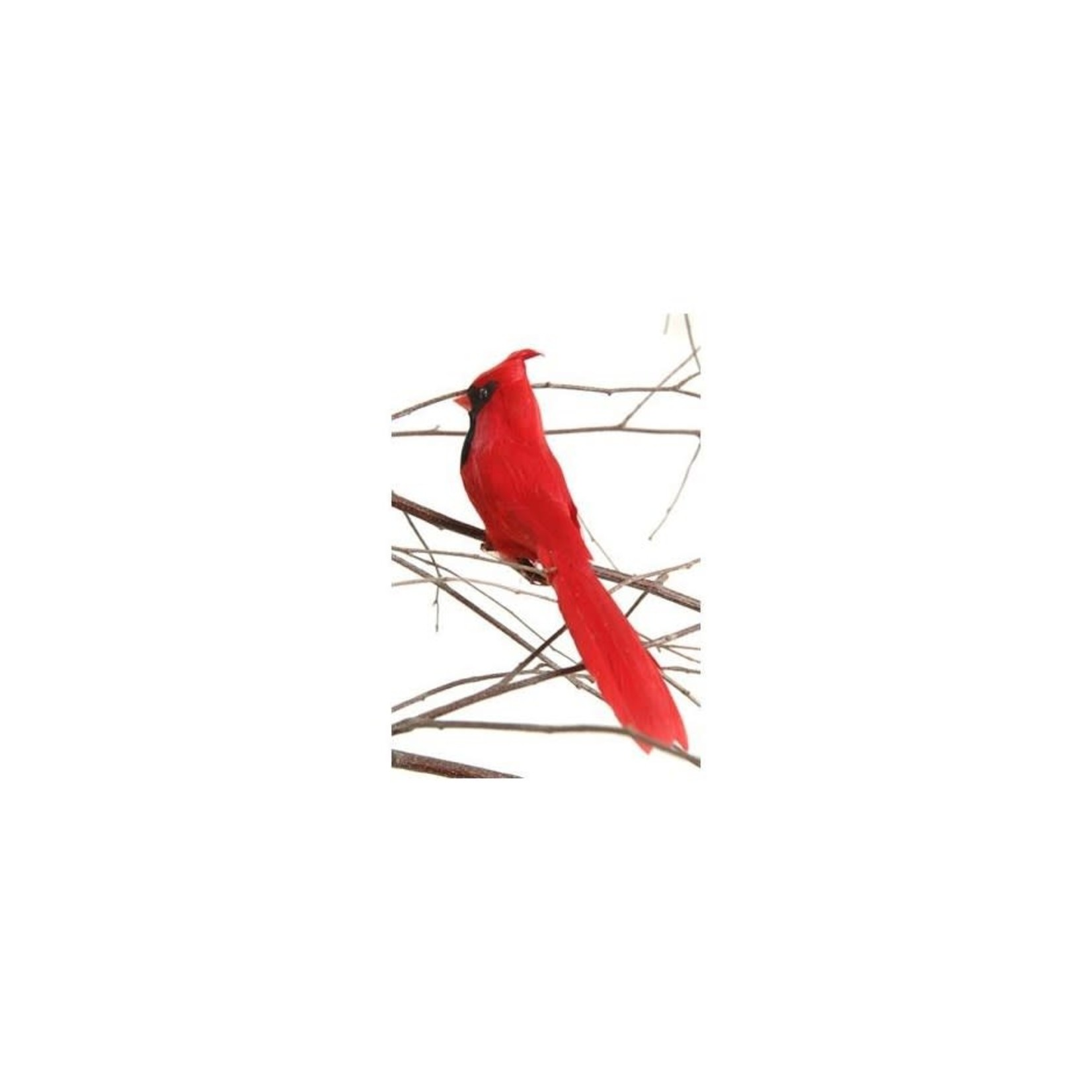 Clip-on Cardinal