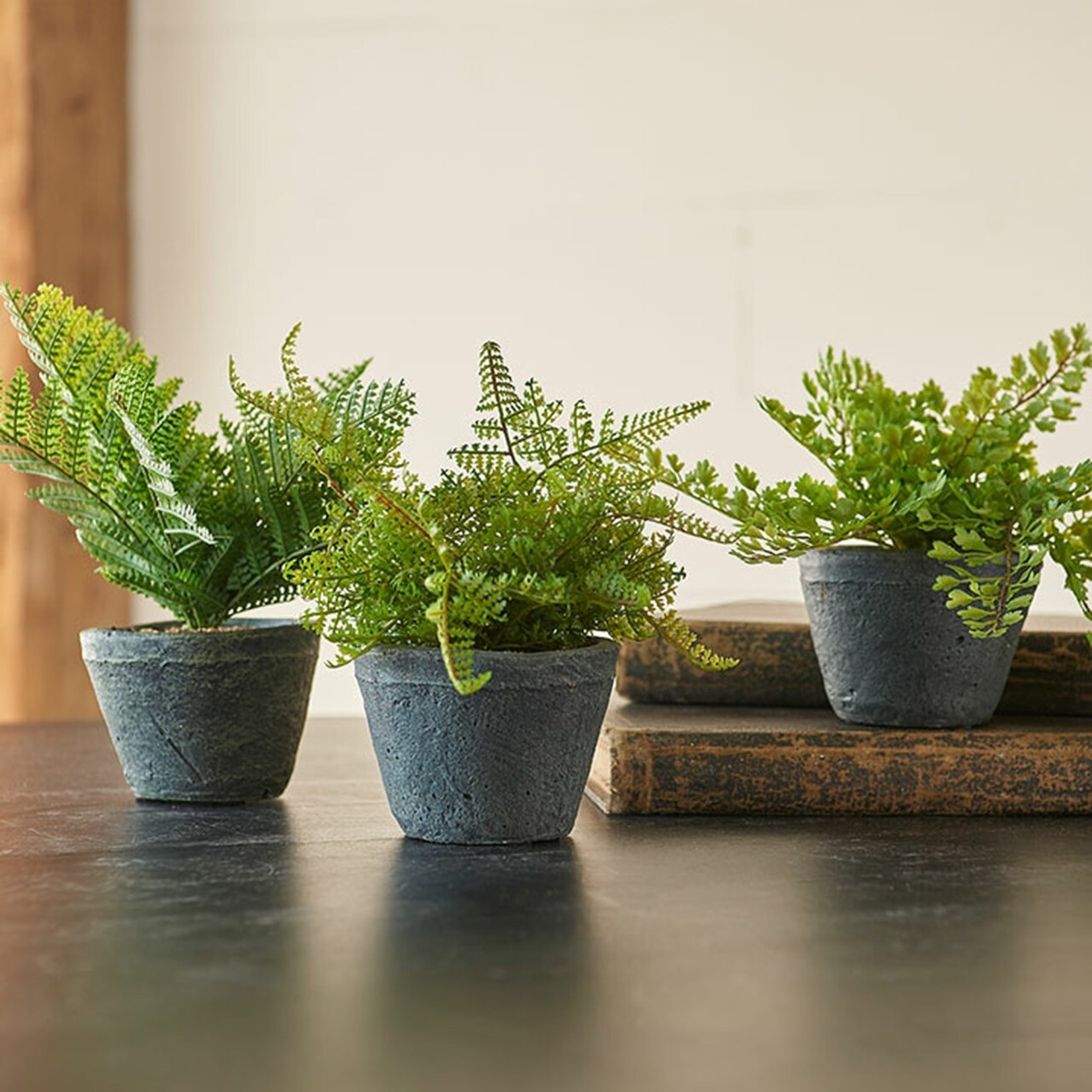 Potted Fern (Multiple Options)