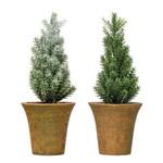 Fir Tree in Pot (Multiple Styles)