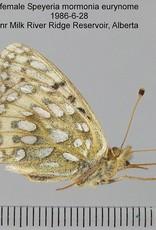 Speyeria mormonia eurynome PAIR A1 Canada