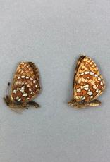 Boloria eunomia triclaris PAIR A1 Canada