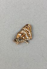 Chlosyne damoetus damoetus M A1 Canada