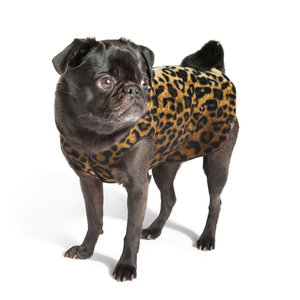 Gold Paw Gold Paw Single Layer Fleece Leopard