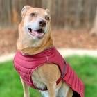 Doggie Design Alpine Extreme All-Weather Waterproof Dog Puffer Coat Burgundy