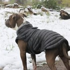 Doggie Design Alpine Extreme All-Weather Waterproof Dog Puffer Coat Black