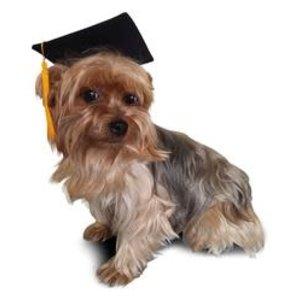 Poshpups Graduation Cap