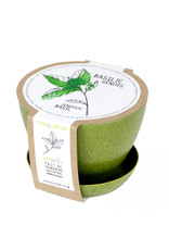 Mano Verde Minipot Basilic génois