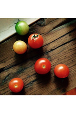 Mano Verde Minipot Tomate cerise