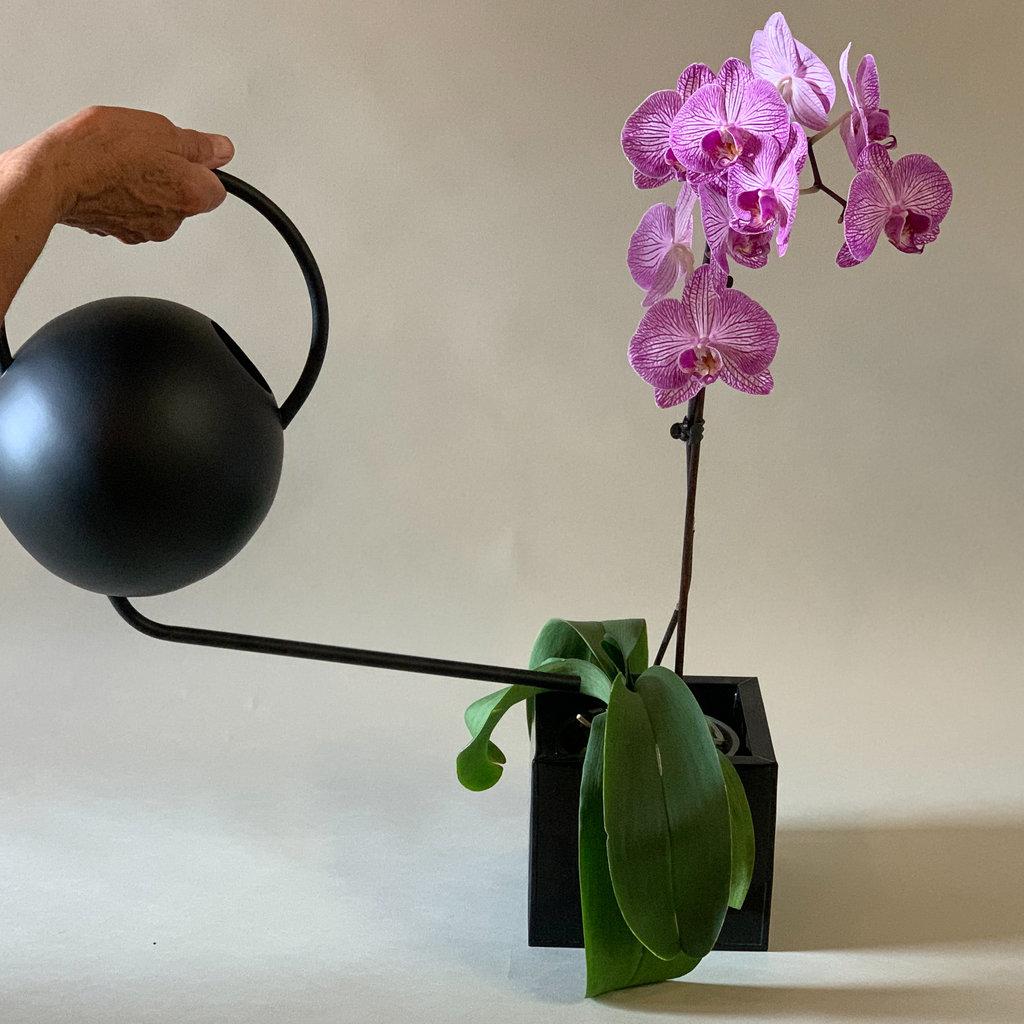 Nordic Watering Pot