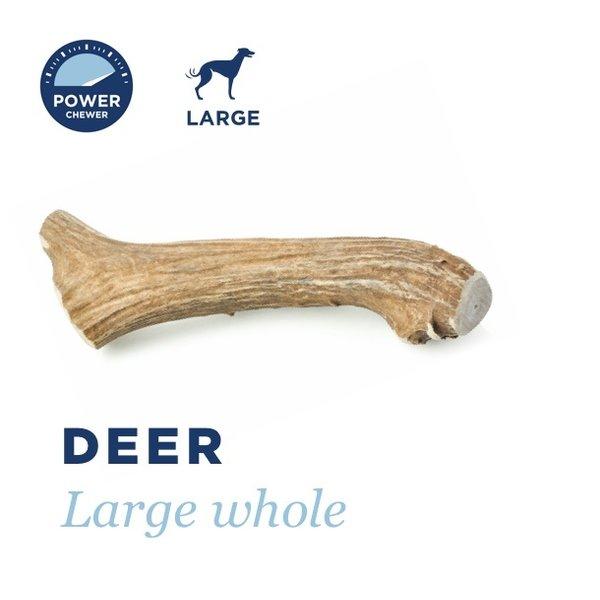 """Barkworthies Deer Antler Large, 8""""-9"""""""