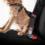 Ezy Dog Seat Belt Restraint, Black