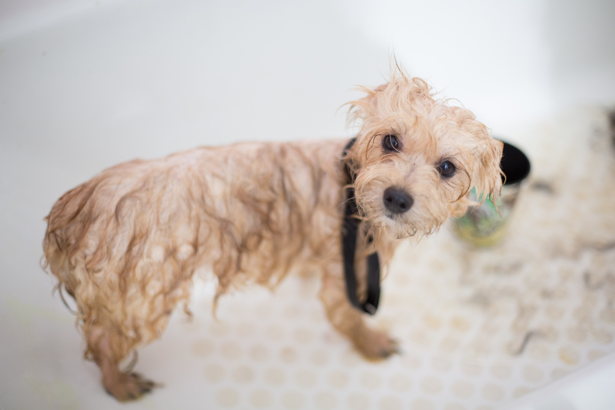 WHY YOU SHOULD BATHE YOUR PET