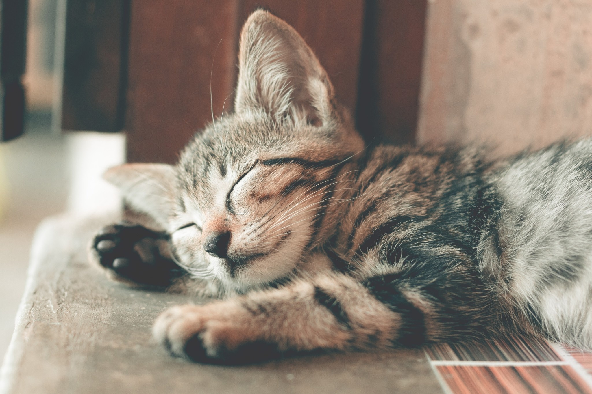Tips for Keeping Your Cat Relaxed