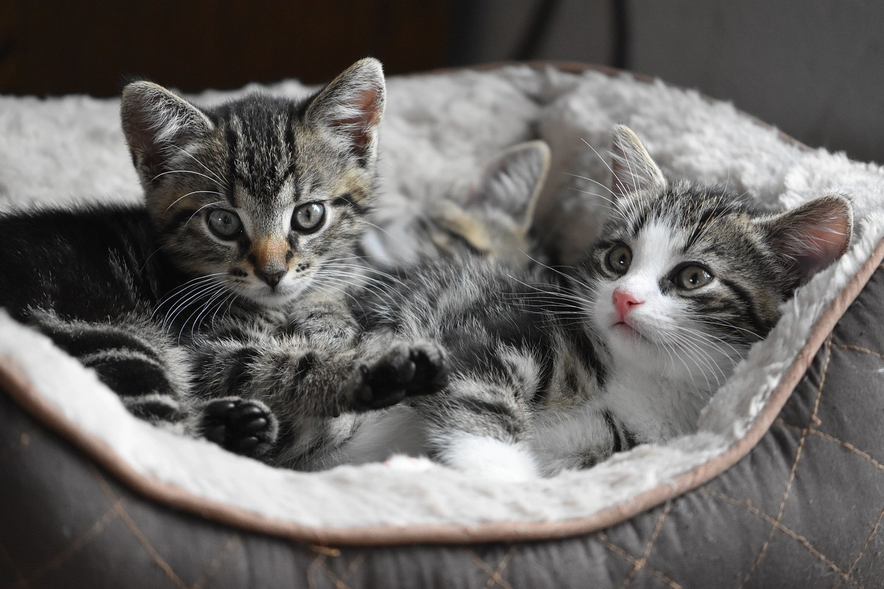 Boarding Your Feline Family: Why Vaccinations Are Essential
