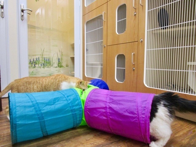 Drop Off vs. Diva: The Difference Between Luxury Cat Boarding and Standard Kennels