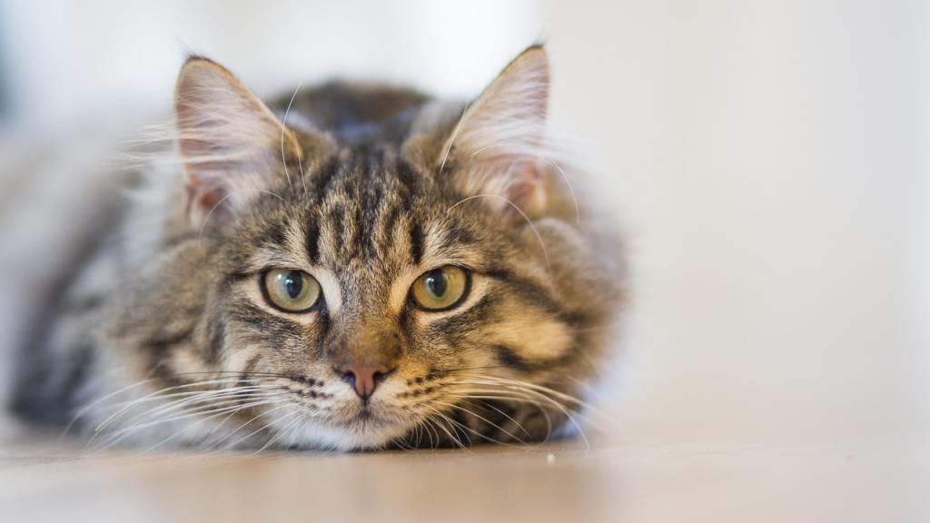 Cat Treats - Good Or Bad?