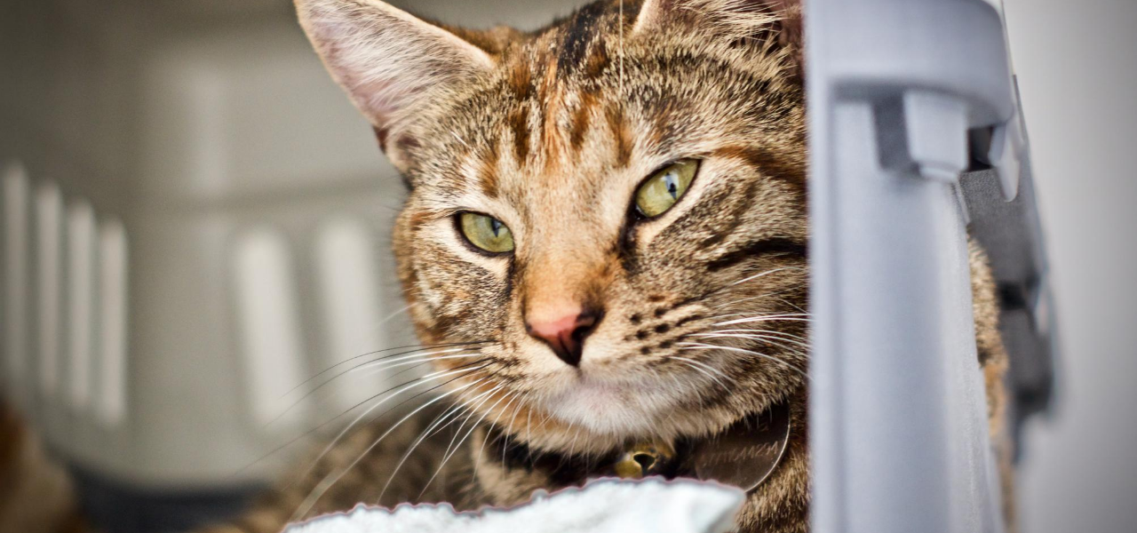 4 Things to Consider When Shopping for the Right Cat Boarding Facility