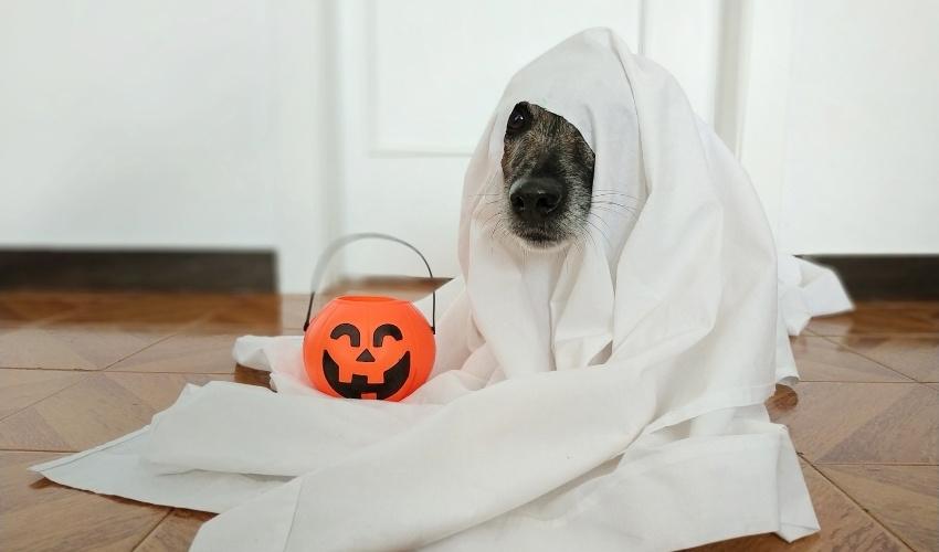 Halloween Pet Dangers