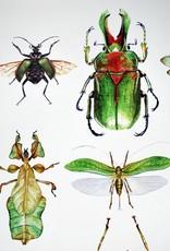 "Kirsten Beard ""Insect Poster"" (12x18) by Kirsten Beard"