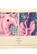 Follicle by JJ McLuckie