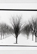 """""""Trees"""" silver gelatin print (6.5""""x7"""") by Ben Lurie"""