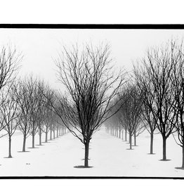 """Trees"" silver gelatin print (6.5""x7"") by Ben Lurie"