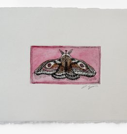 """Moth"" etching with pink hand watercoloring, Lily Cozzens"